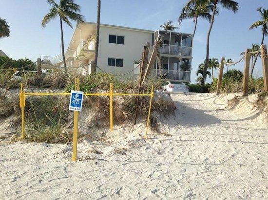 Sunset Beach Inn: I'm a big time sea turtle enthusiast.
