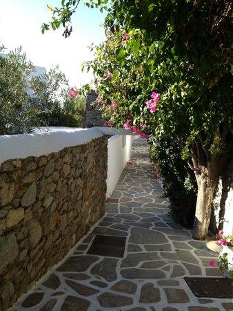 Seaside Cottage by Belvedere: The garden
