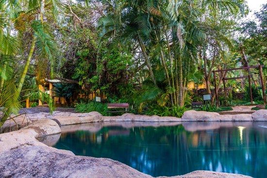 Gecko Lodge: Pool