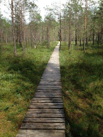 Castillo de trakai: Sentiero botanico di Varnikai (Trakai) - palude
