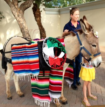 Fairmont Scottsdale Princess: Cinco de Mayo Burro in Serape w/Cevases