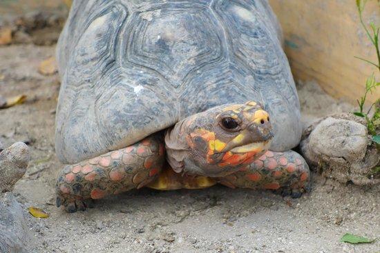 St. Maarten Zoo : Turtle