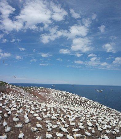 Hiking Trails in Bonaventure Island : Moment magique