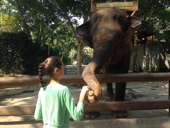 Bali Zoo: Elephant feeding about $5AUD