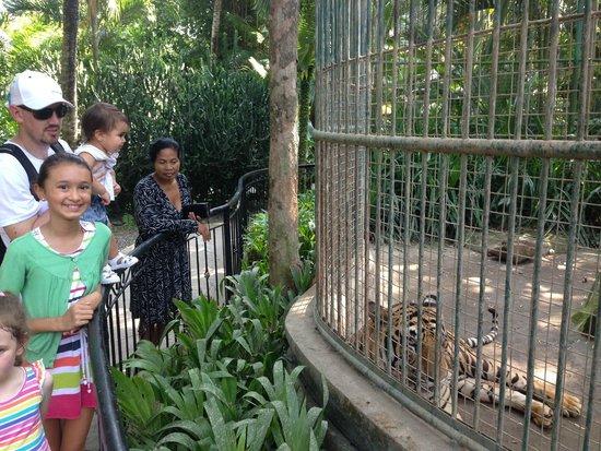 Bali Zoo: Getting up close
