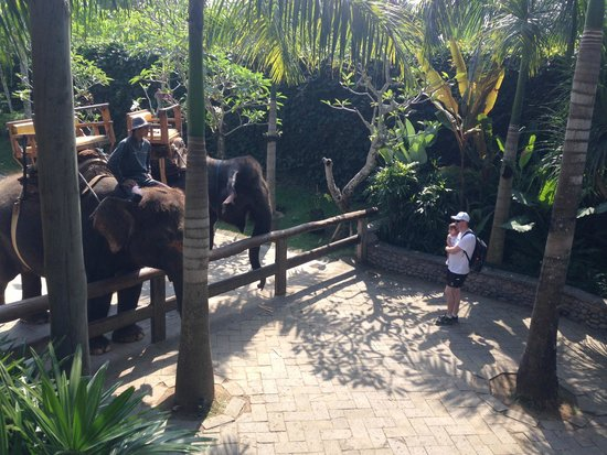 Bali Zoo: Elephant rides available but looking is free:)