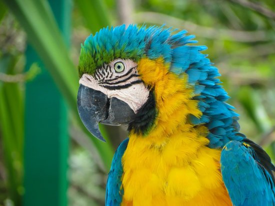 St. Maarten Zoo: Gorgeous Macaw
