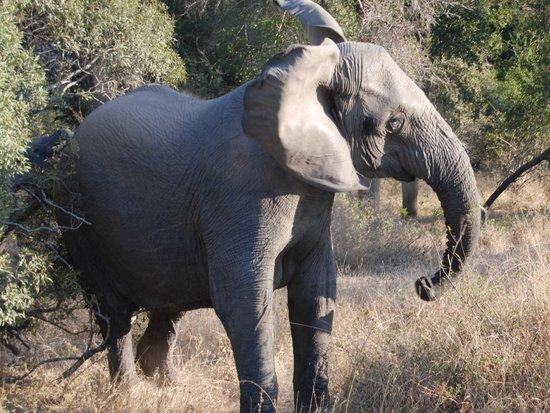Hamiltons Tented Safari Camp: wildlife