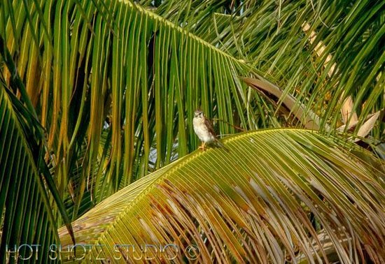 Abaco Beach Resort and Boat Harbour Marina: Local wildlife