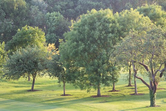 Hotel Barriere L'Hotel du Golf Deauville: View of trees on the golf course