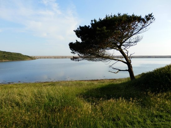 Littlesea Holiday Park - Haven: View from Nature Reserve Camping