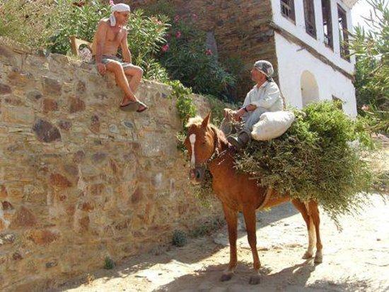 Grapevine House: Horseman Ali
