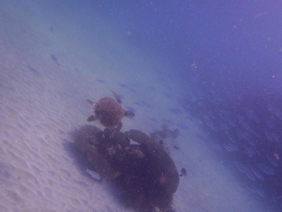 Constance Tsarabanjina: snorkeling