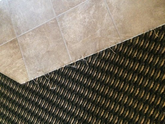 Comfort Suites Rochester: Frayed carpet in whirlpool suite