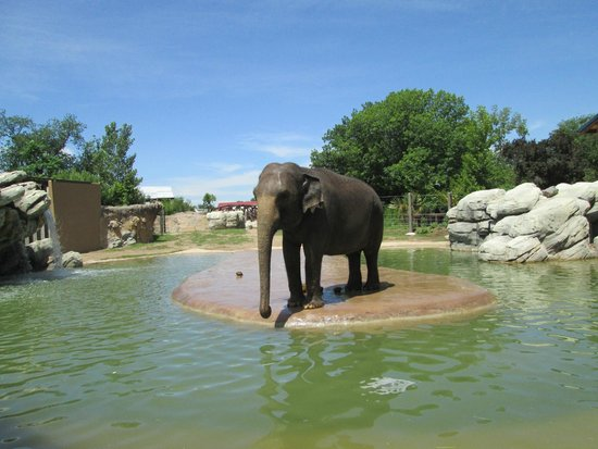 Denver Zoo: Dolly the elephant