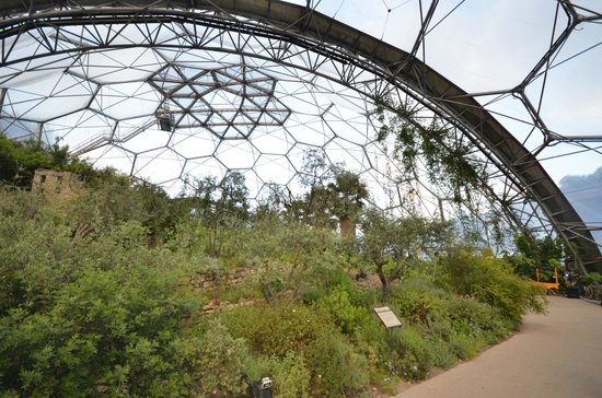 Eden Project : Inside the Med Biome
