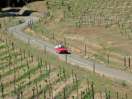 Butterfly Creek Winery & Vineyards: On my way to the chapel.