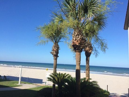 Ponte Vedra Inn & Club: Palms and Beach View from Room