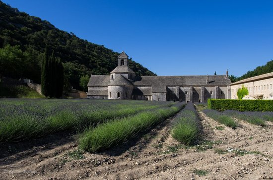 Abbaye Notre-Dame de Sénanque : the abbey with the not ready yet lavender