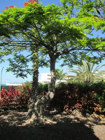Paraiso del Sol Apartments : Собственный сад.