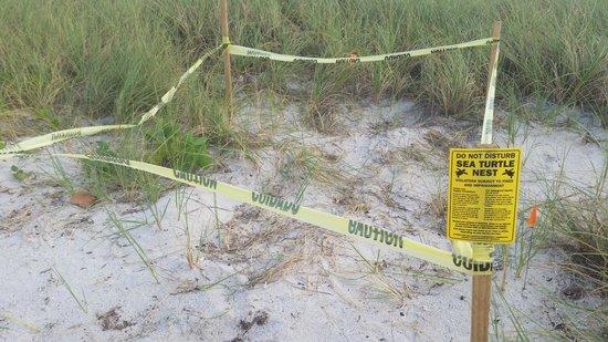 Sombrero Beach - Turtle Nest