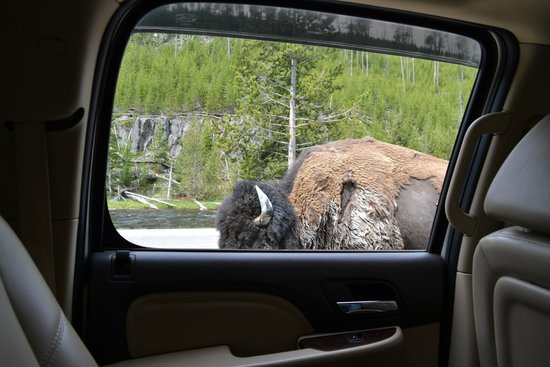Grizzly Country Wildlife Adventures: up close and personal!