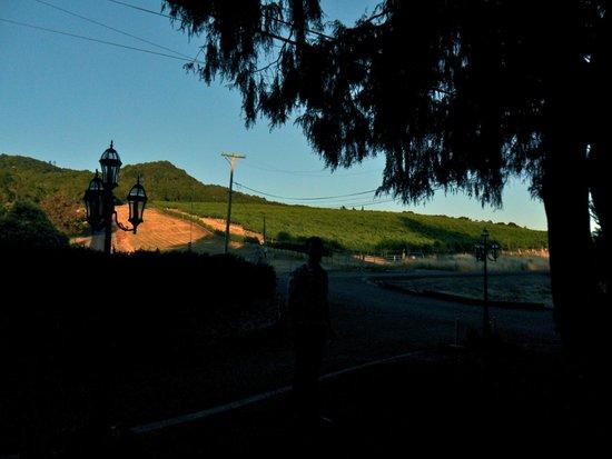 The Gables Wine Country Inn: Vineyards opposite the Gables B & B