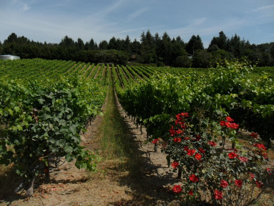 The Gables Wine Country Inn: Vineyard nearby, Sonoma Valley
