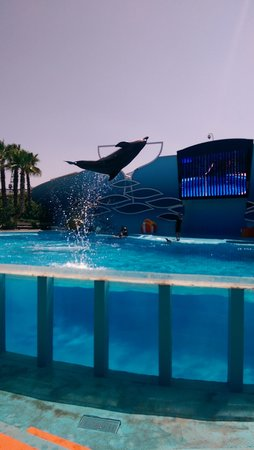Zoomarine Algarve : magnificent dolphin