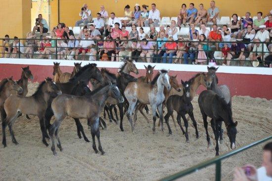 Yeguada de la Cartuja: The little ones