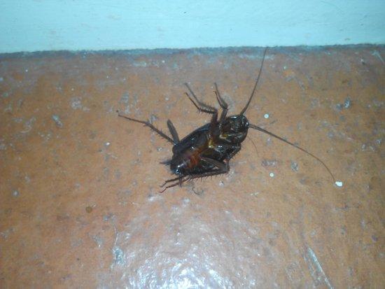 Cigarral El Bosque: Cucarachas en la habitación