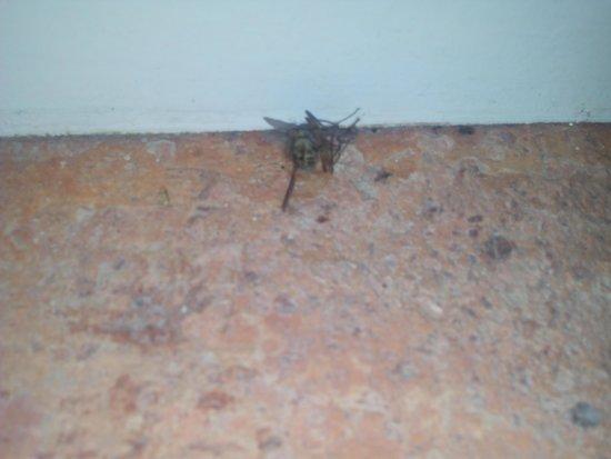 Cigarral El Bosque: Insectos muertos y suciedad