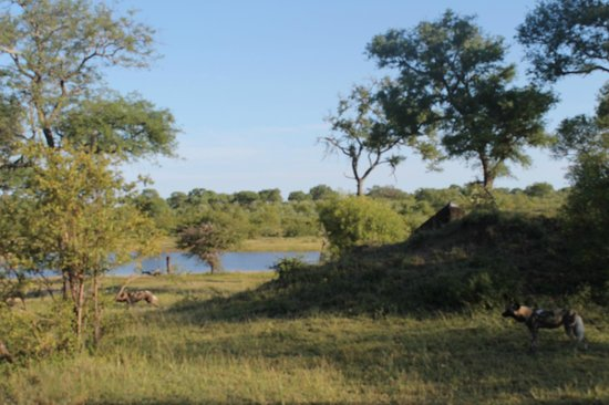 Nkorho Bush Lodge: Game drive