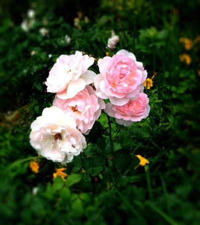 CityRover Walks NY : Central Park flowers