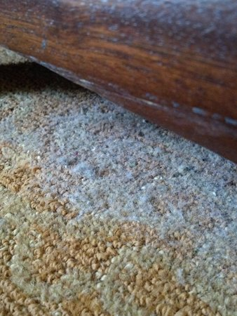 Crowne Plaza Hotel Astor-New Orleans: gross...dust on the carpet