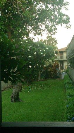 Kihei Bay Surf: jardim - frente a varanda