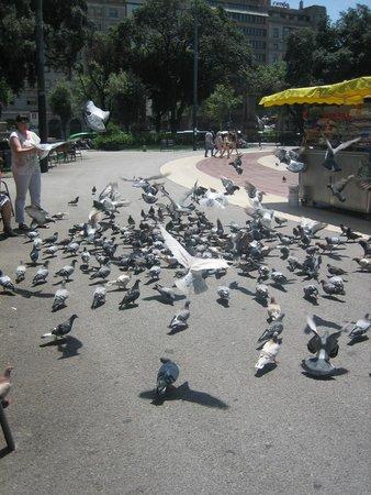 Plaza de Cataluña: Площадь Каталонии