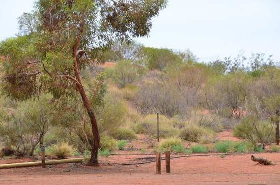 Ayers Rock Campground: sauvage