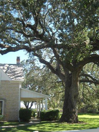 Lyndon B. Johnson National Historical Park: Surrounded by Huge Oaks