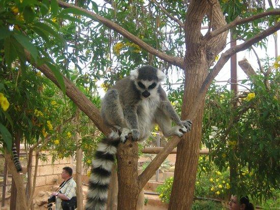 Monkey Park : Лемуры.