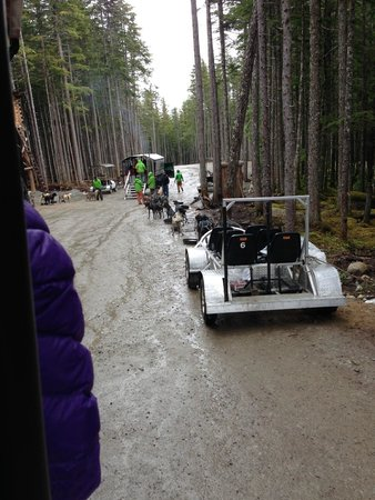 Dog Sled Discovery & Musher's Camp: Carts pulled by dogs.