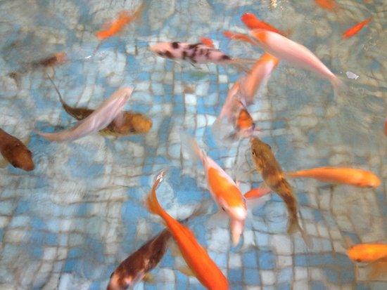 Hagoshrim Hotel & Nature: koi pond in lobby of hotel