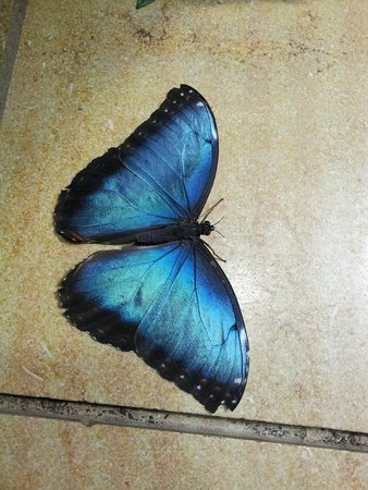 National Museum of Natural History: Butterfly room!