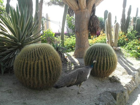 Giardini Ravino: 1