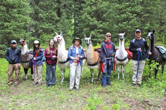 Jackson Hole Llamas: Group shot creek-side