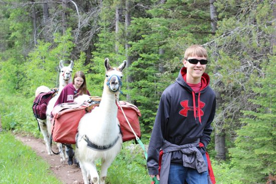 Jackson Hole Llamas: The llamas pose for pictures!