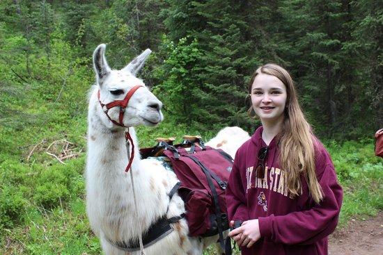 "Jackson Hole Llamas: Chloe and ""Lucy"""