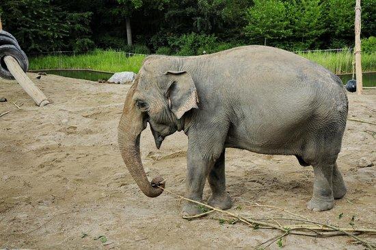 Copenhagen Zoo: Трудяга