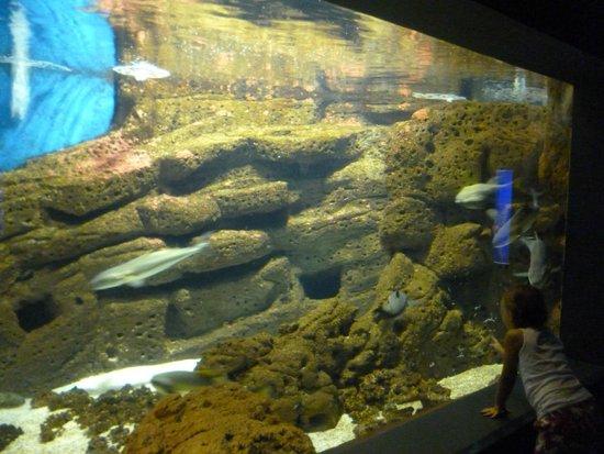 Gournes Pediados, กรีซ: Большой аквариум