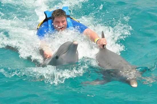 Cozumel Palace: Dolphin Encounter